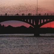 Austin-Bats
